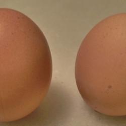 Curiosidades sobre los huevos que igual no sabías